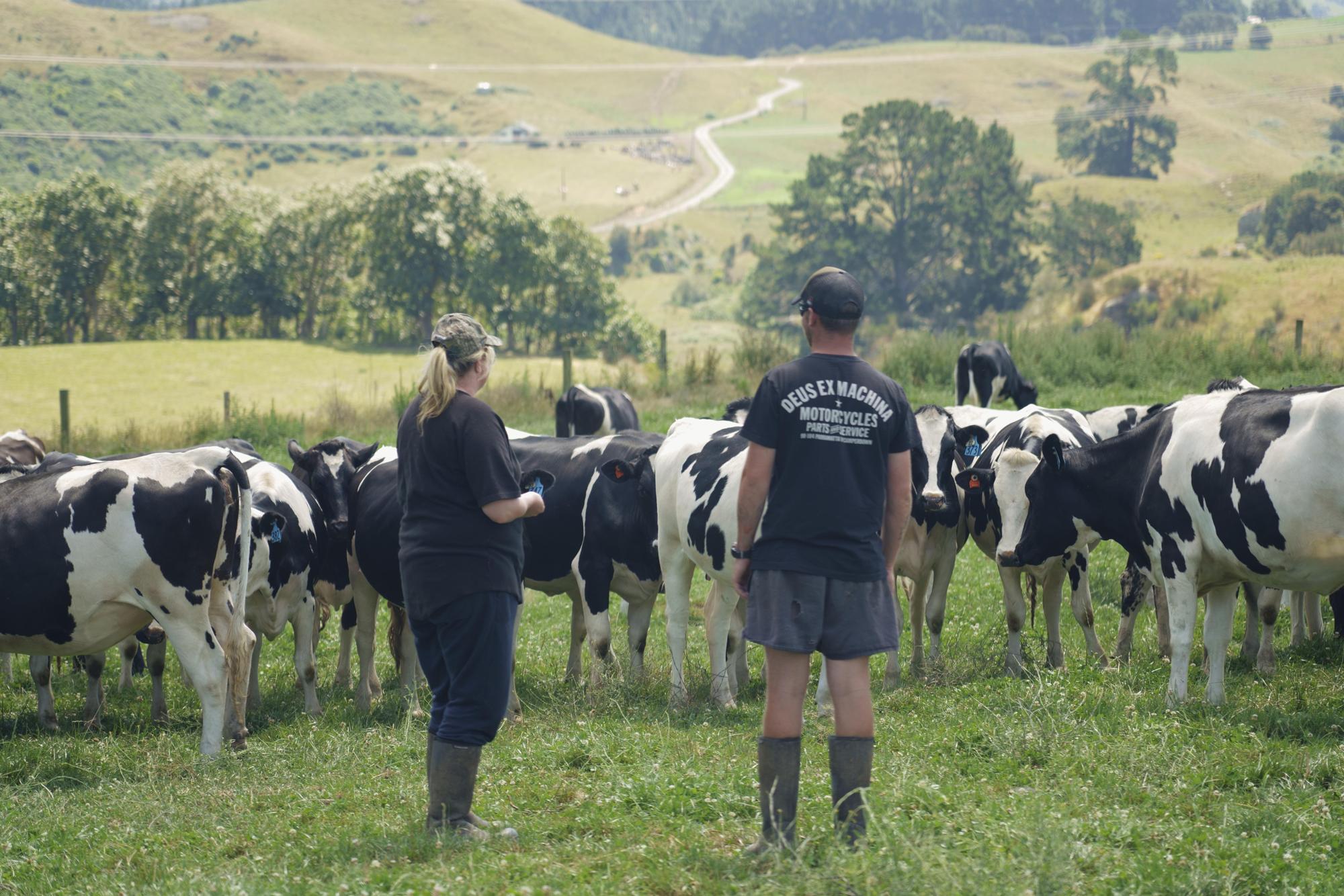 Overlooking Herd